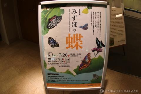 みずほの蝶0604-2_1.jpg