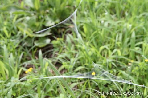 クモの糸0728-1_1.jpg