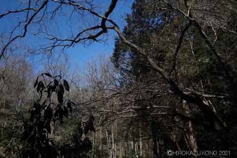 コガタスズメバチの巣0216-1.JPG