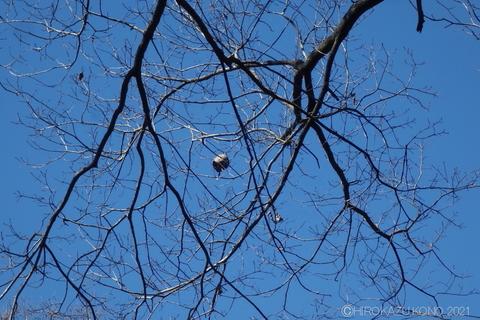 コガタスズメバチの巣0216-2.JPG