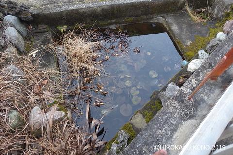 ヤマアカガエル0207-2_1.jpg