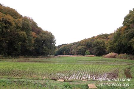 宮野入谷戸1126-2_1.jpg