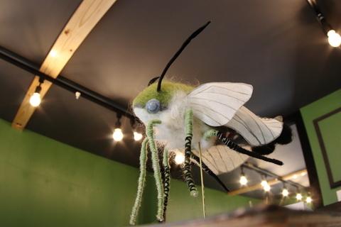 小さな翅20101028-3.JPG