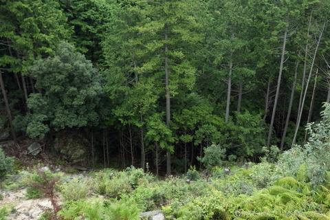 山頂0908-4.JPG