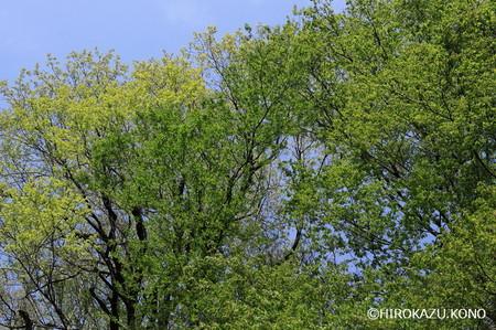 木々の芽吹き0418_1.jpg