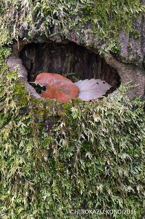 木の葉0131_1.jpg