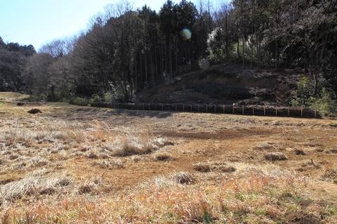 湿地0215-1.JPG