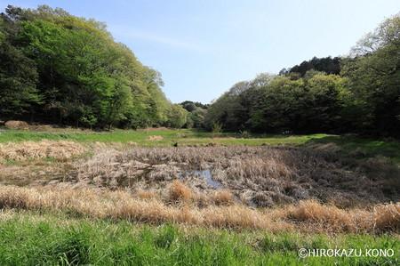 湿地0418_1.jpg