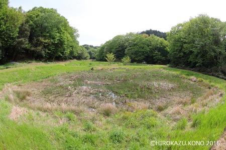 湿地0425_1.jpg