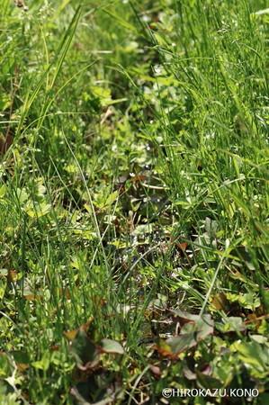 湿地0426_1.jpg