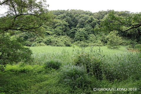 湿地0531_1.jpg