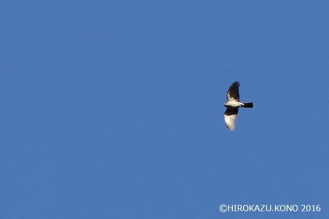 猛禽1231_1.jpg