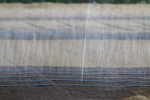 畑の水まき0720.JPG