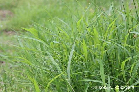 草はら0627_1.jpg