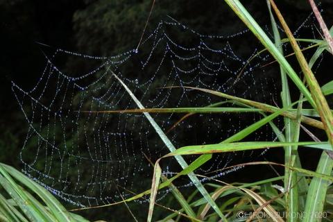 蜘蛛の糸0729-2.JPG