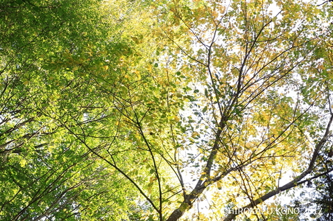雑木林1027_1.jpg