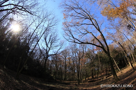 雑木林1222_1.jpg