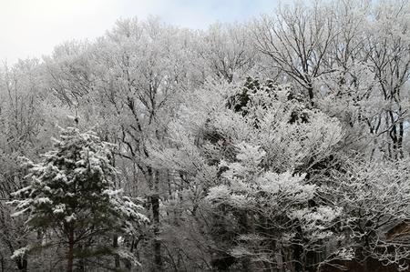 雪0225-1.JPG