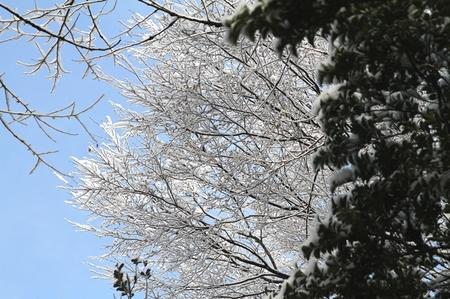 雪0225-2.JPG