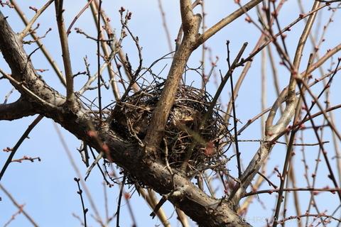 鳥の巣0116-1_1.jpg